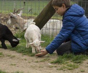 Tierisches Vergnügen für Familien